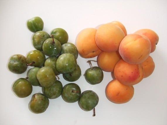 abricot prune