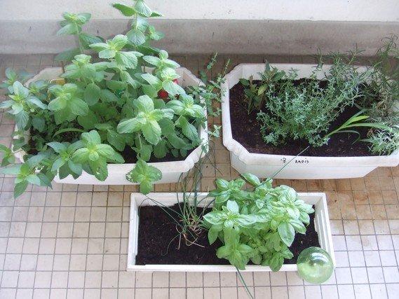 herbes sur balcon