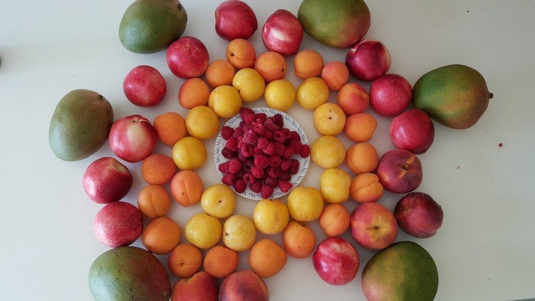 fruits20