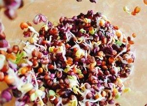 Faire germer ses graines à la maison, facile et rigolo !