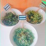 Spaghettis crus et trois sauces, spiruline, sésame noir et graines germées. Laquelle préférez-vous ?